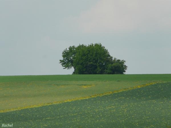 arbre zoomé