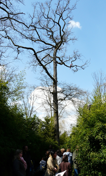 perroquet sur un arbre