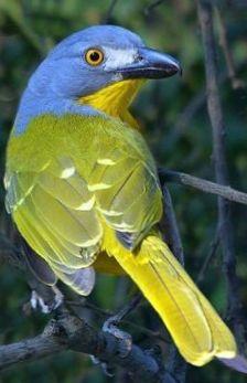 couleurs du perroquet zoom en vol