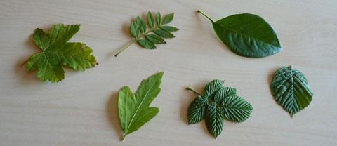 feuilles pour arts visuels automne