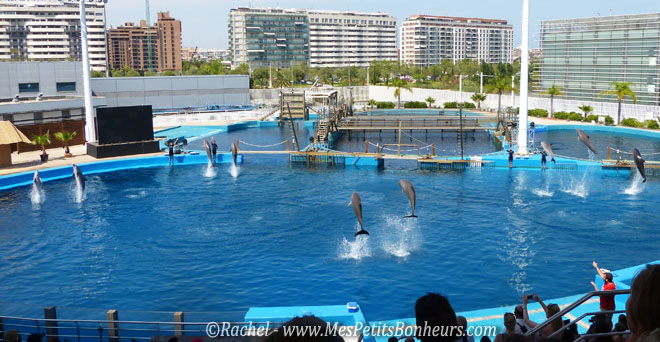 dauphins final spectacle oceanographic