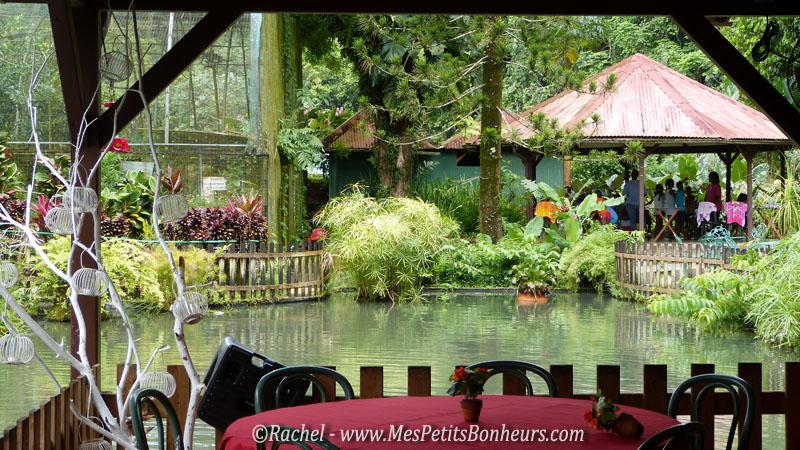 Les jardins de valombreuse en guadeloupe fleurs et plantes tropicales for Abri de jardin guadeloupe