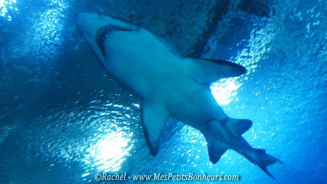 requin et petit sous le ventre