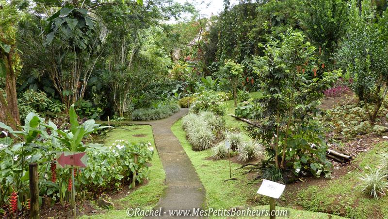 Les jardins de valombreuse en guadeloupe fleurs et for Jardin tropical guadeloupe