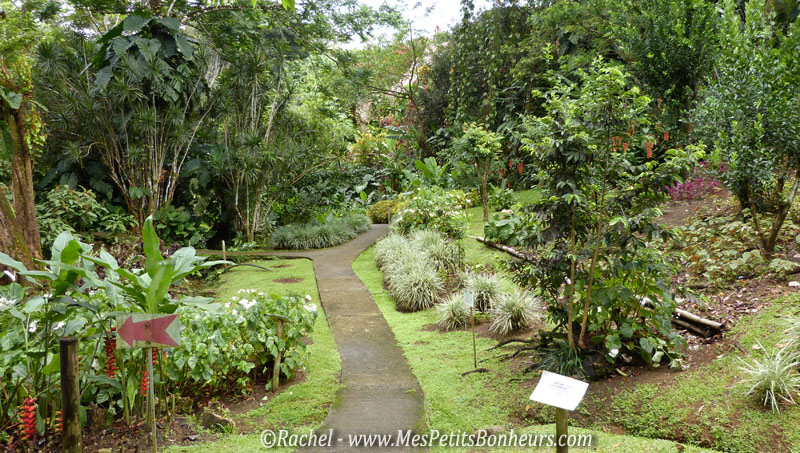 Fleurs exotiques de guadeloupe for Jardin tropical guadeloupe