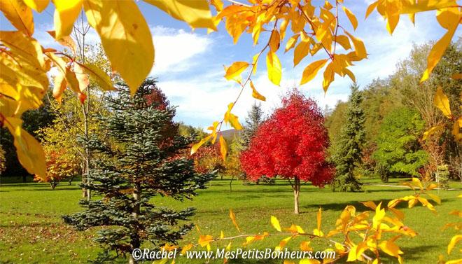 Couleurs d automne et provisions pour l cureuil du jardin for Beaux arbres de jardin