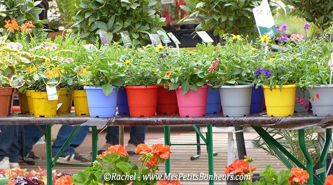 couleurs de pots belflorissiomo 2014