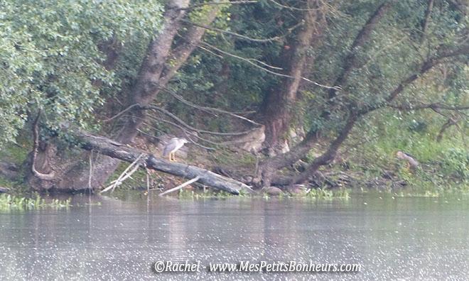 oiseau sur un arbre