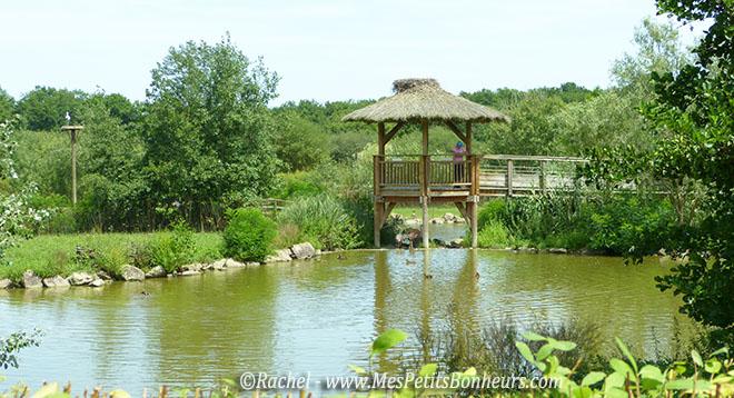 observatoire étang flamands et canards