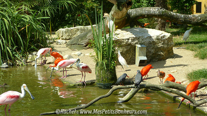 volière du Pal ibis spatules et autres oiseaux