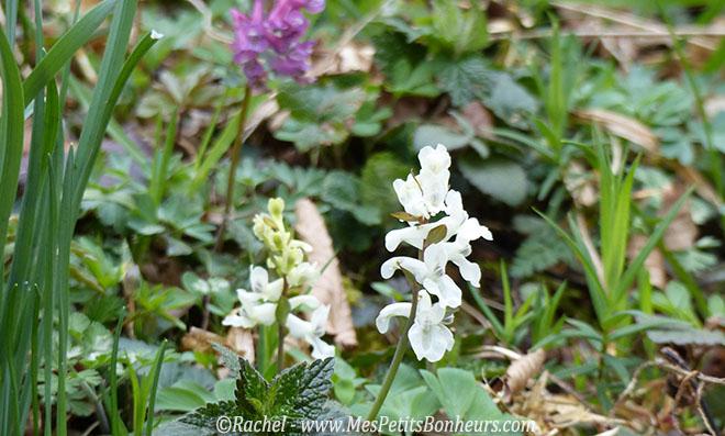fleurs des bois début de printemps