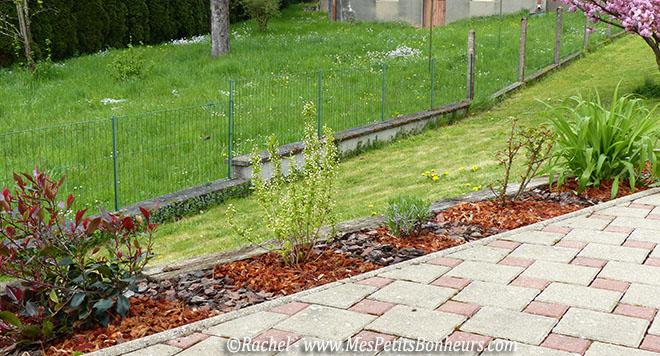 Jardin ma bordure d 39 arbustes fleuris avance for Arbustes de jardin