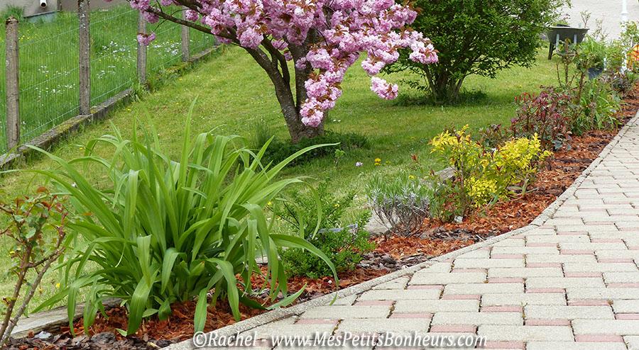 jardin ma bordure d 39 arbustes fleuris avance