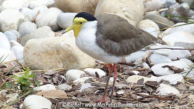 Un logis sur la route des vacances et un parc aux oiseaux for Oiseau jaune et noir