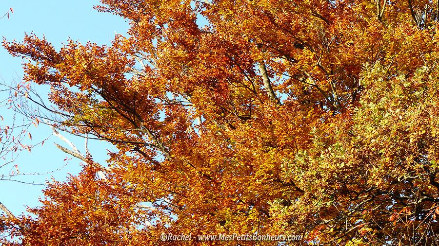 arbre automne flamboyant