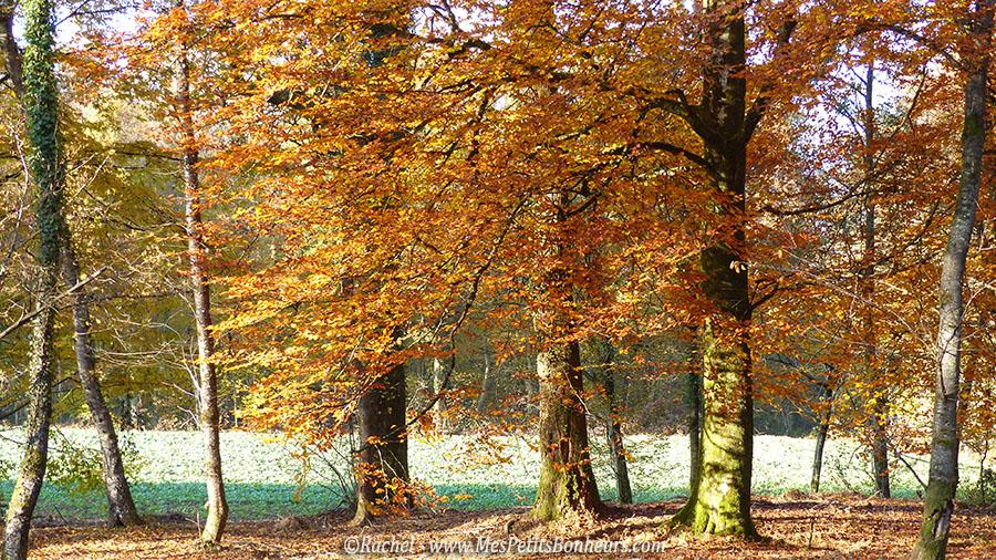 arbres oranges automne foret