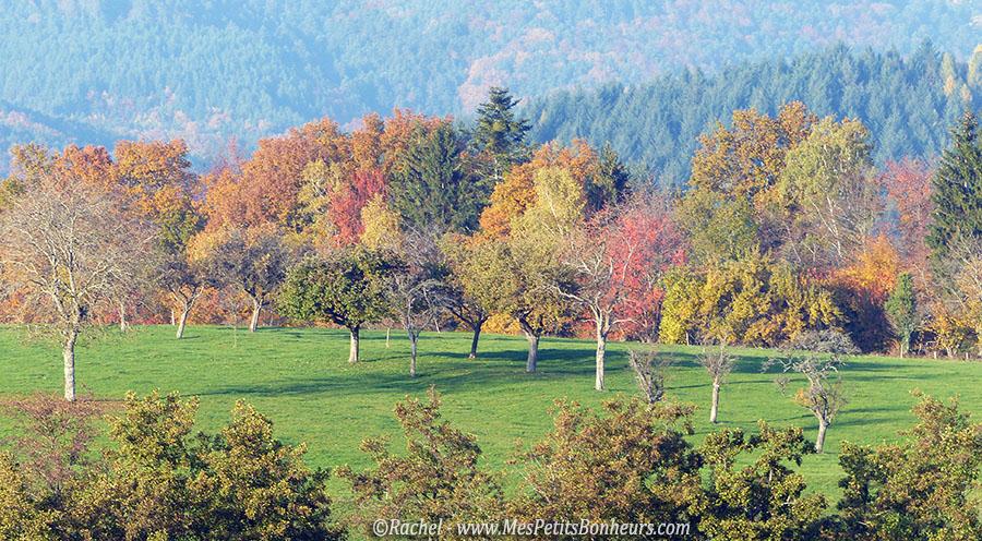 automne alsace arbres prés