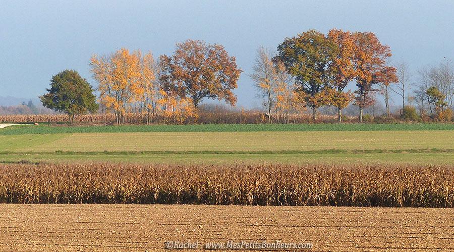 champ labouré et couleurs d'automne