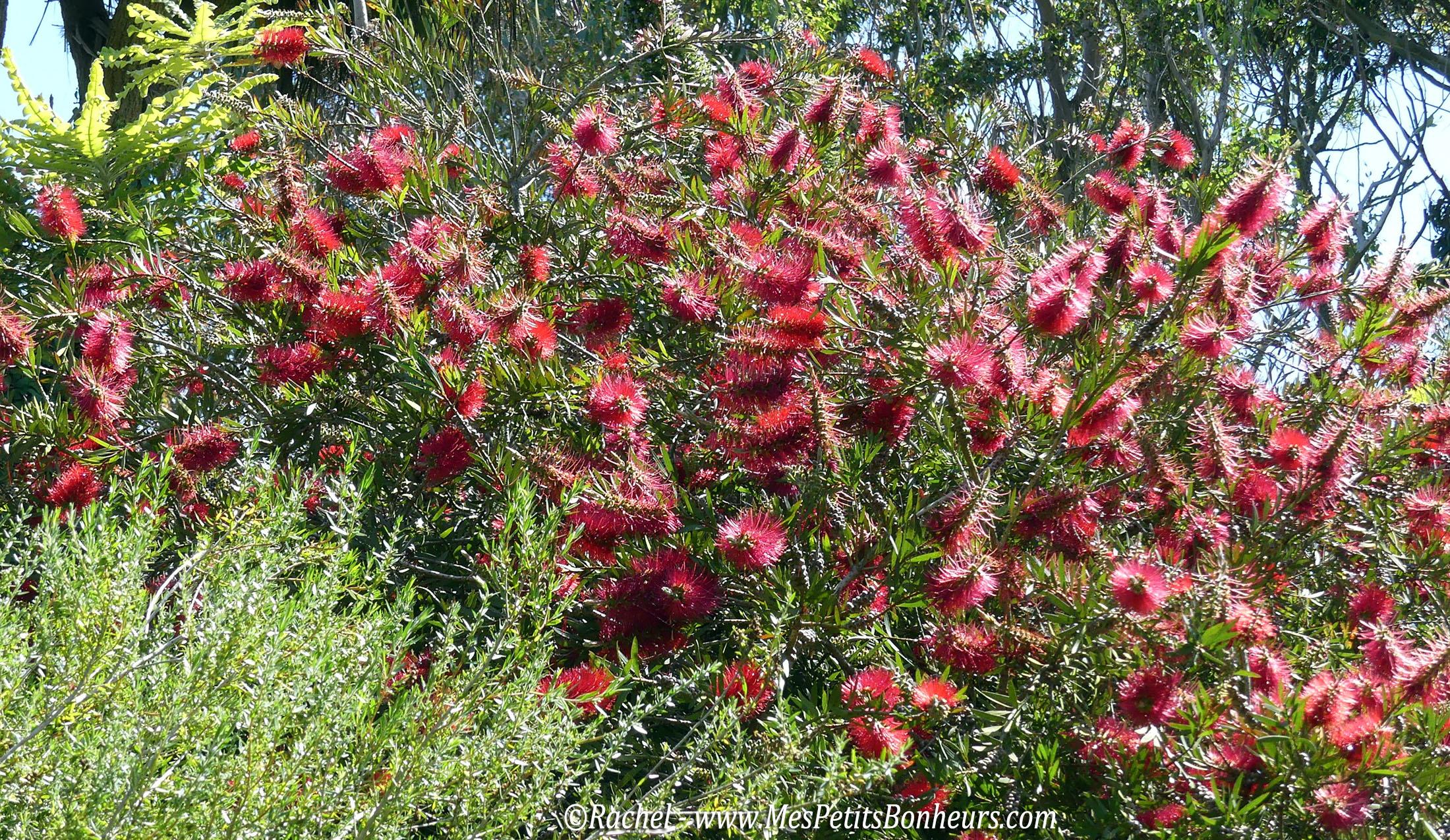 Roscoff balade vers les ports et le jardin exotique et for Arbuste de jardin