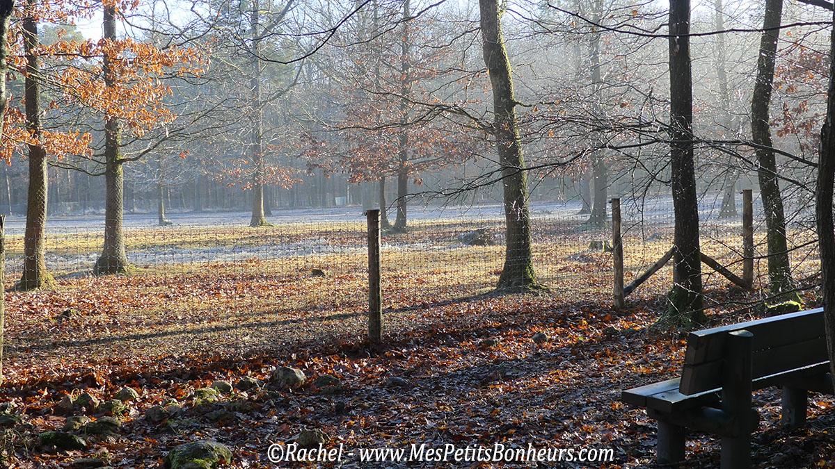 domaine-de-han-sur-lesse-belgique-hiver