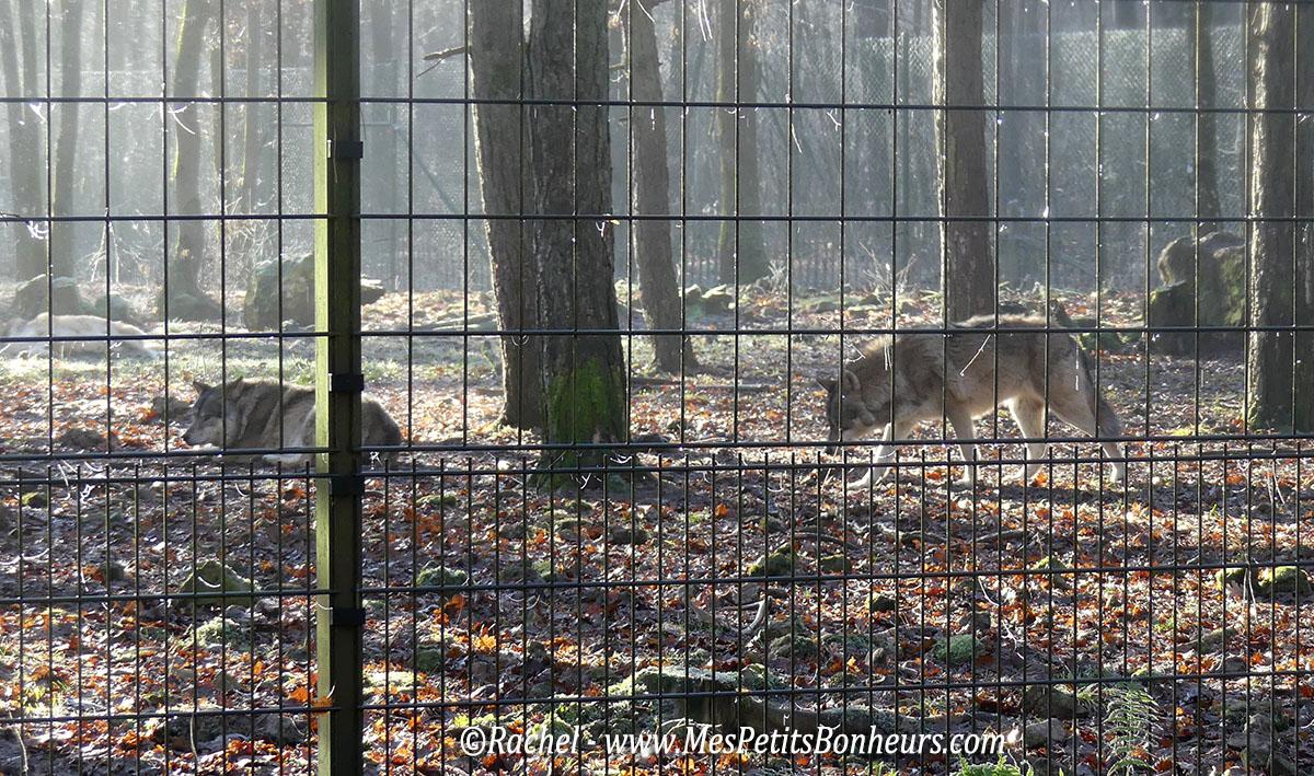 enclos-loups