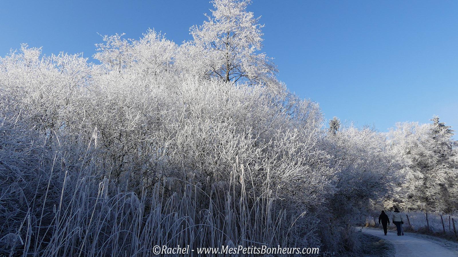 arbres-geles