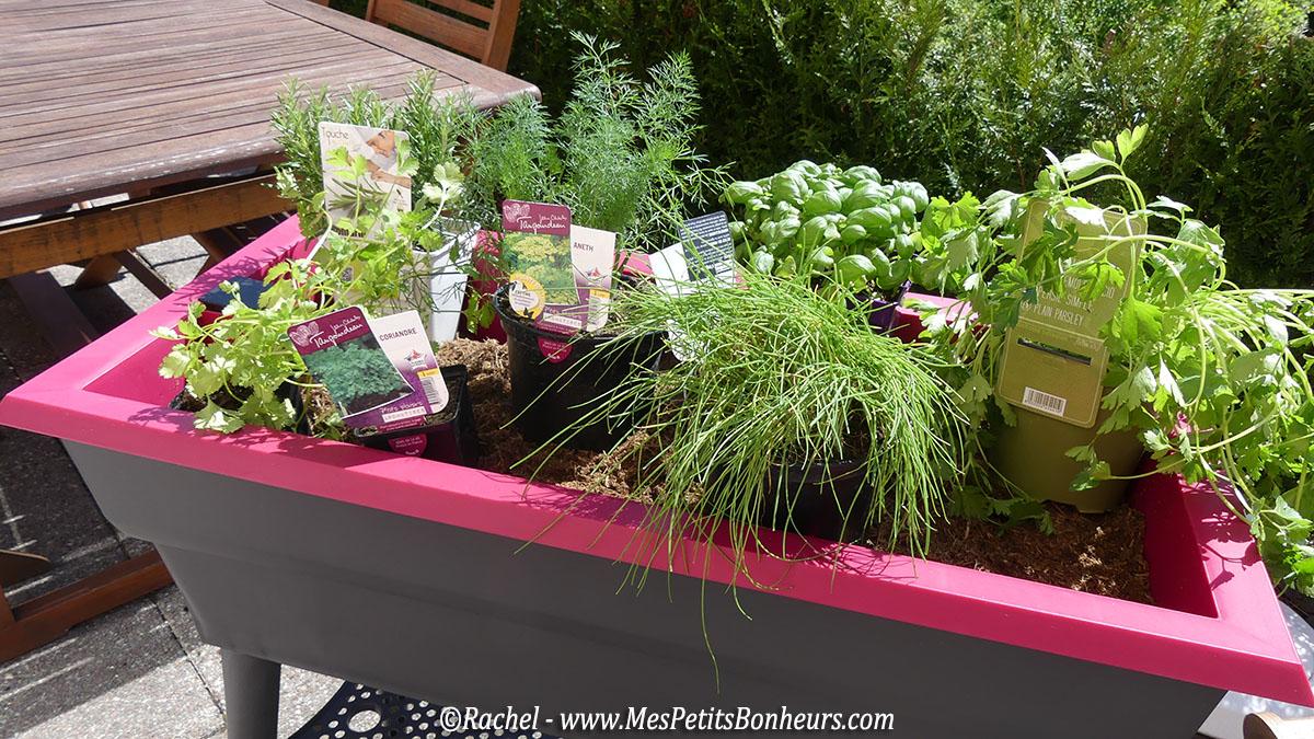 mes plantes aromatiques port e de main dans ma jardini re. Black Bedroom Furniture Sets. Home Design Ideas